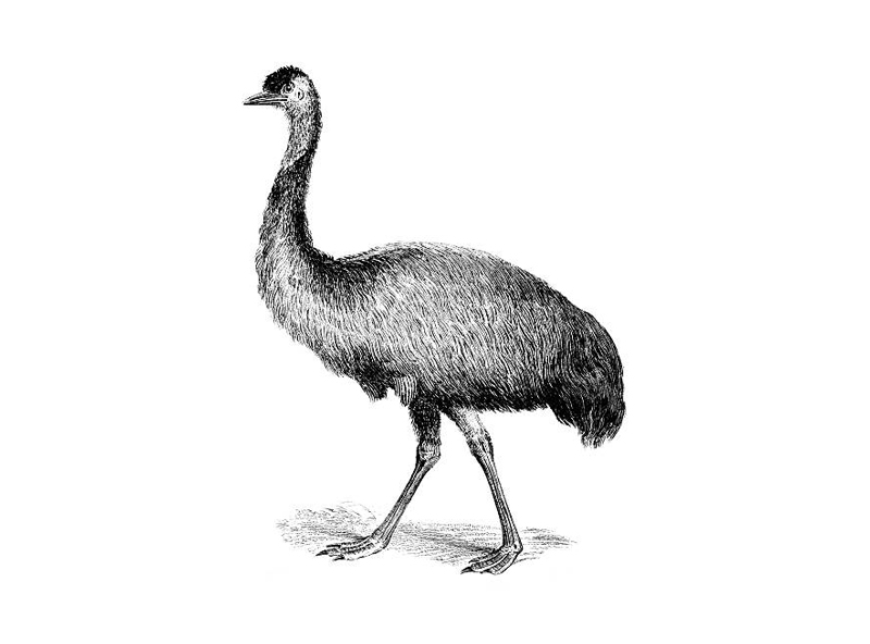 News in Brief: Polls now show Newts and Emus in dead tie