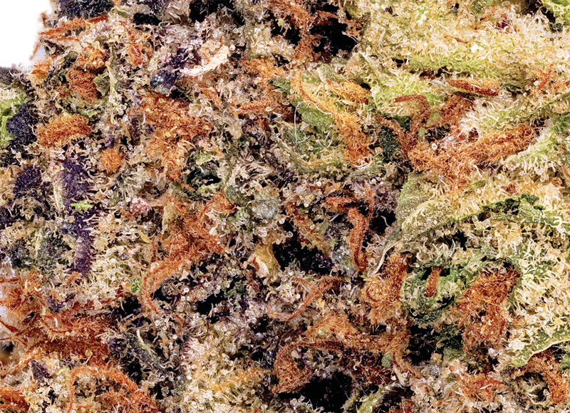 TOP THC STRAINS TO GET FOR THE HOLIDAYS