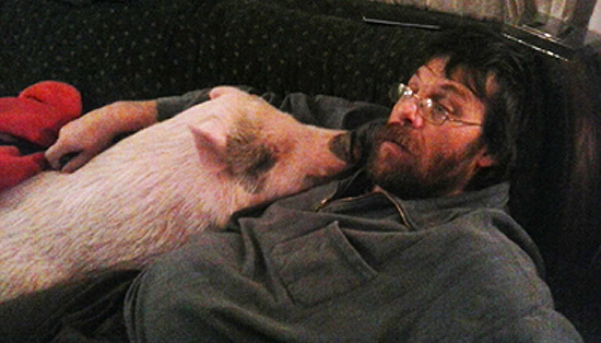 Pig Eats Marijuana Stash, Ohio Man Flies Into A Rage And Gets Tasered By Cops