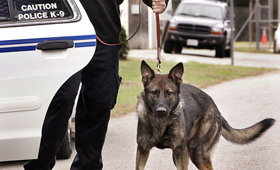 Police Can No Longer Make You Wait for Drug Dog Searches
