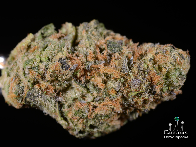 Girl Scout Cookies from Chronic Therapy