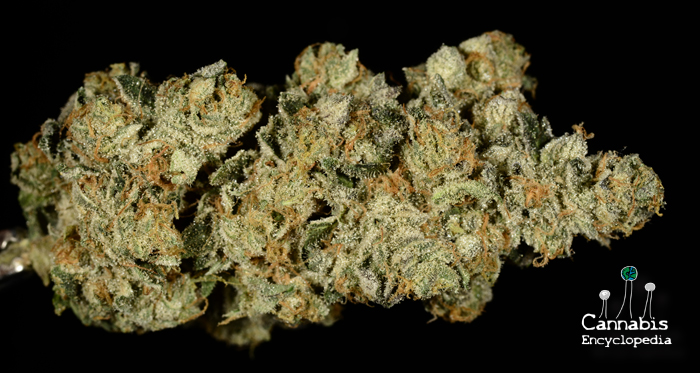 Girl Scout Cookies from Fox Wellness
